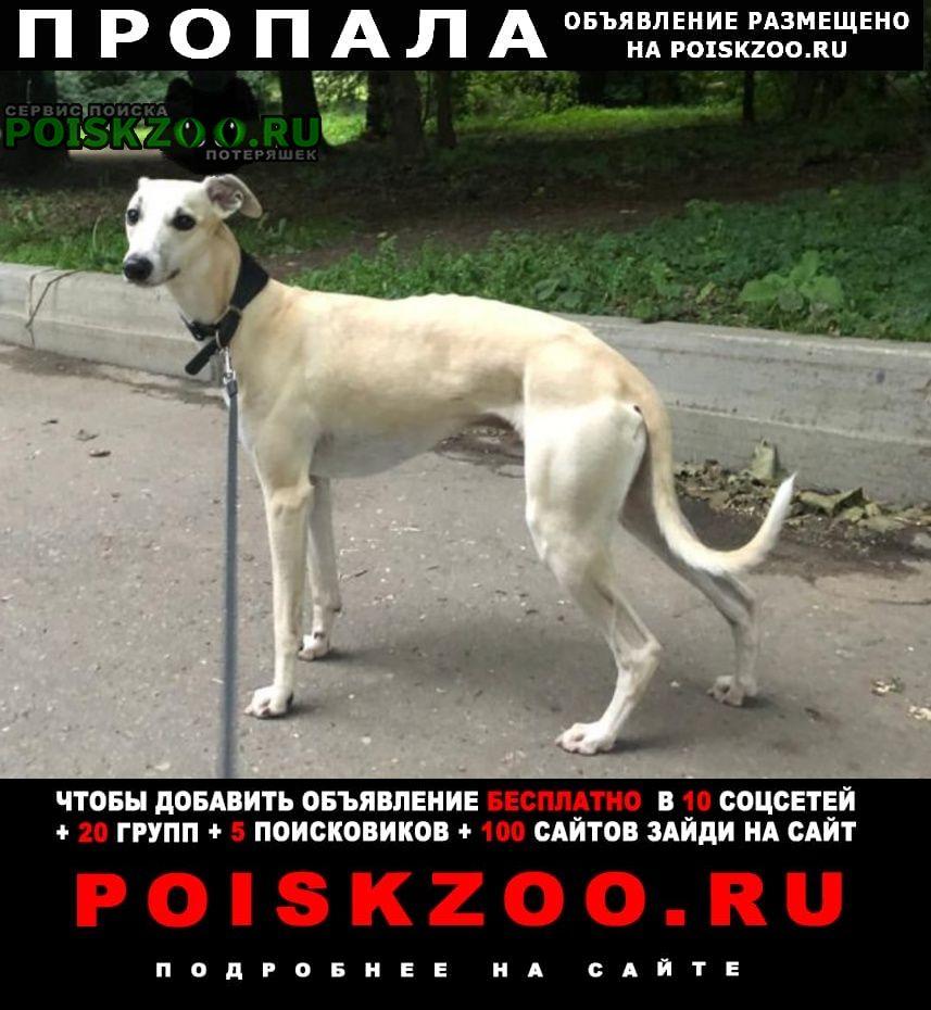 Пропала собака кобель уиппет Москва