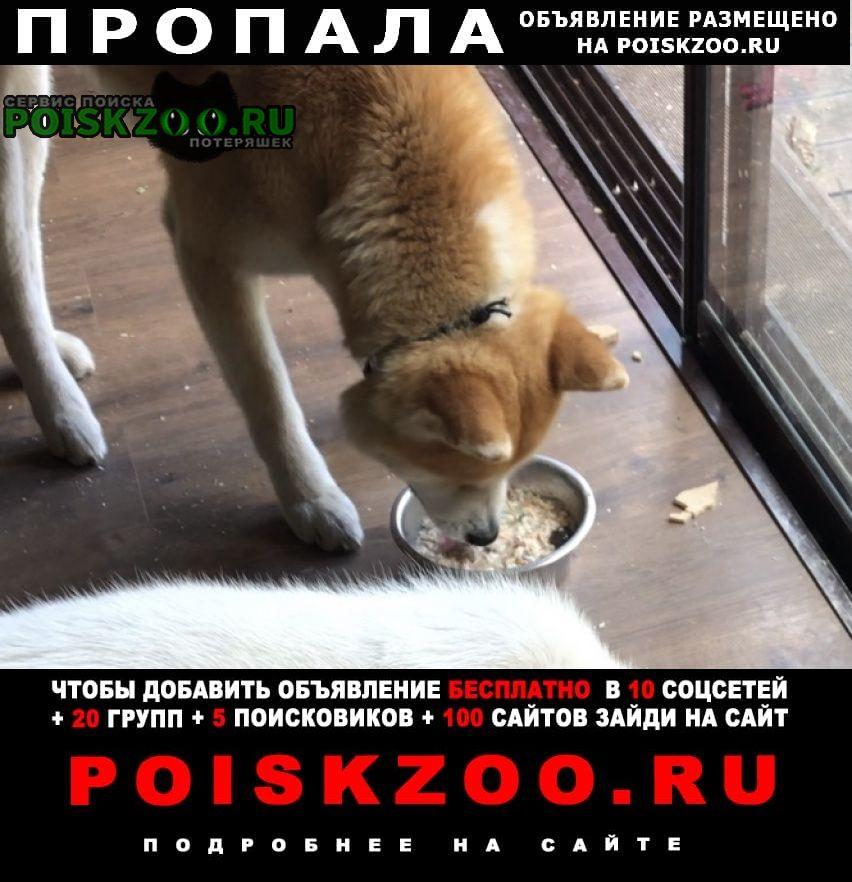 Московский Пропала собака помогите найти