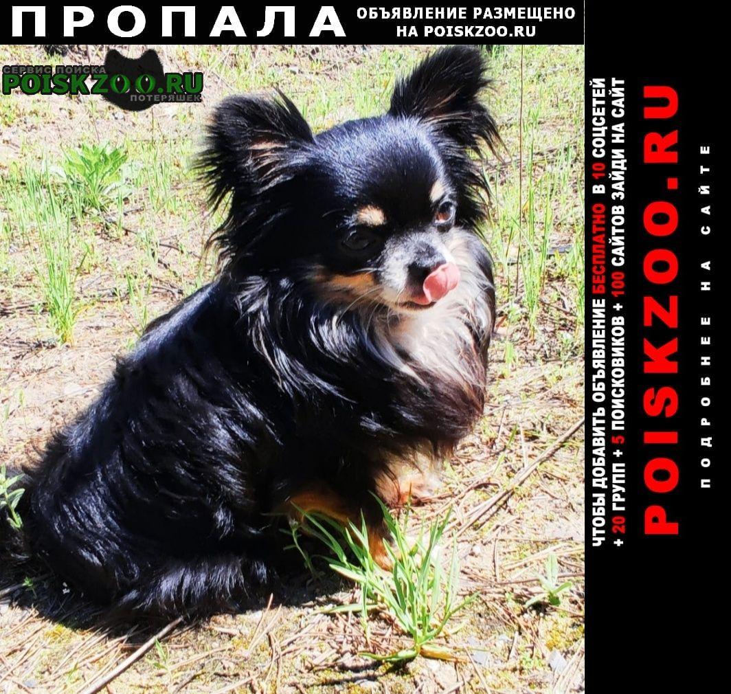 Воронеж Пропала собака кобель