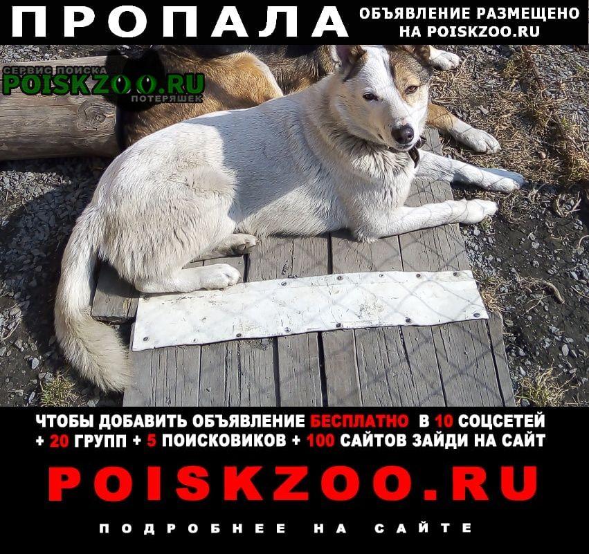 Томск Пропала собака кобель