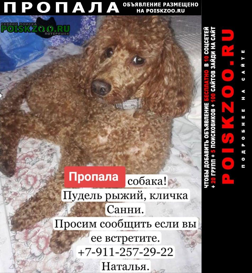 Приозерск Пропала собака пудель