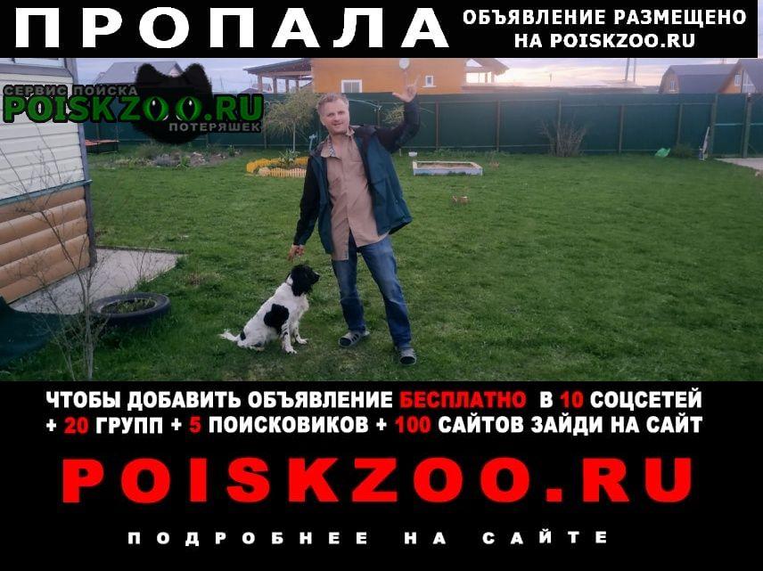 Пропала собака девочка русский спаниель Анапа