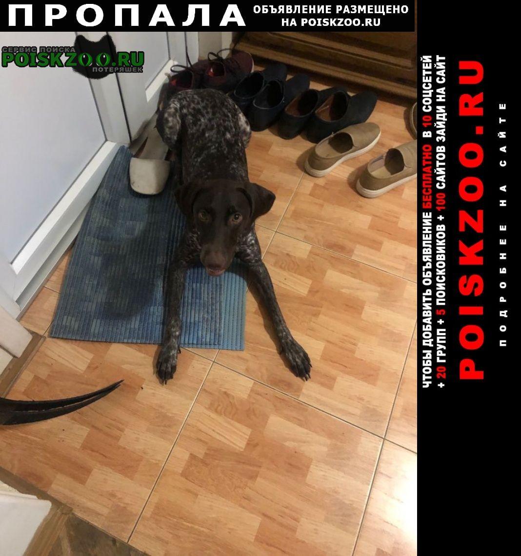 Пропала собака потерялась курцхаар Краснодар