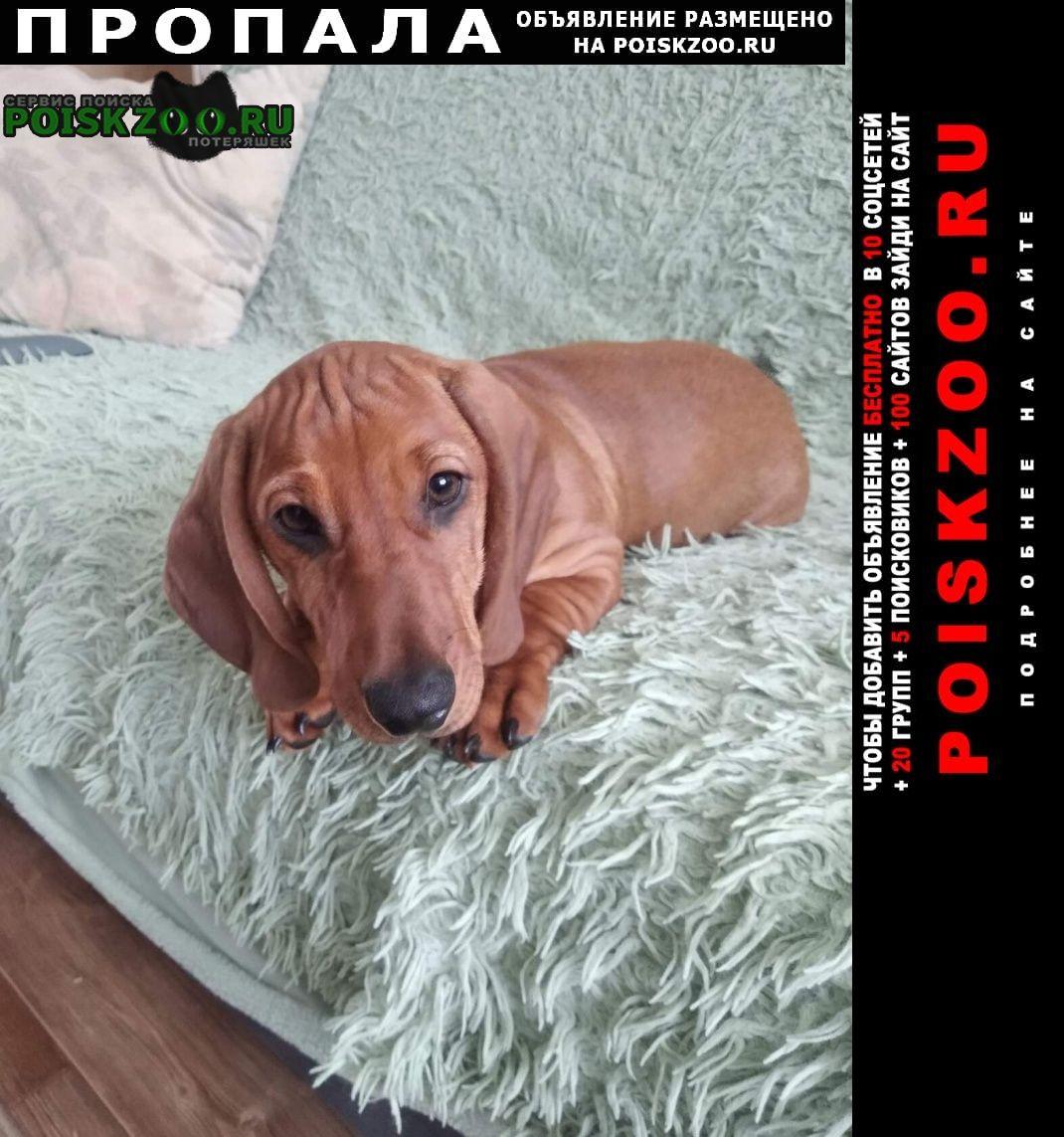 Пропала собака кобель Великодворский