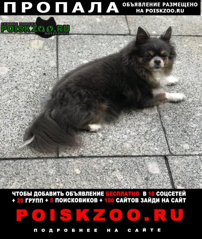 Пропала собака Архипо-Осиповка