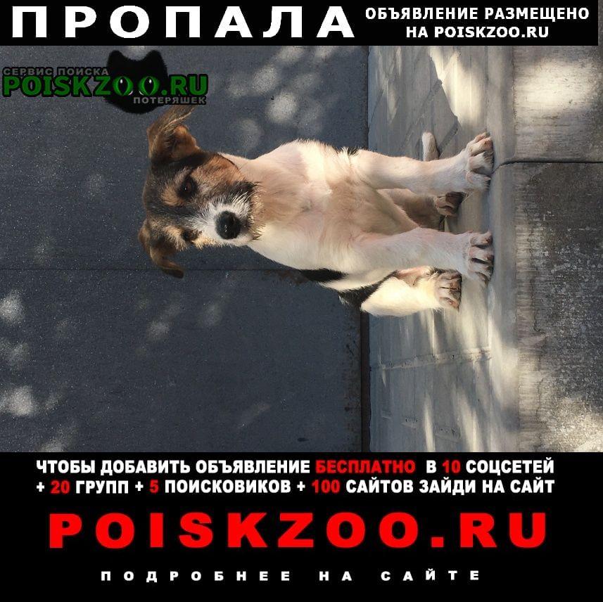 Пропала собака кобель щенок Волгоград