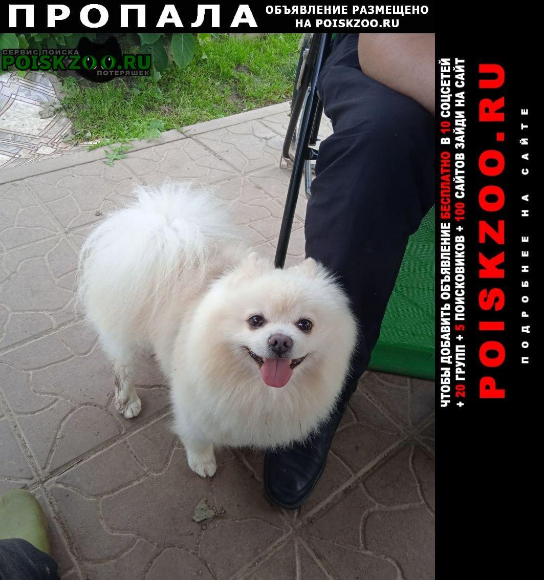 Смоленск Пропала собака кобель
