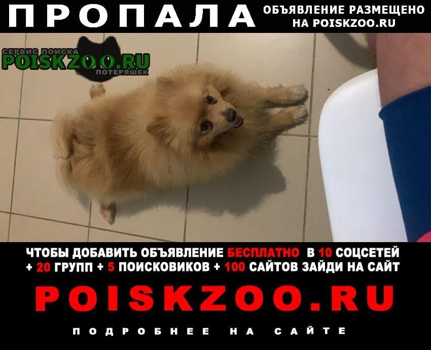 Пропала собака кобель Сочи