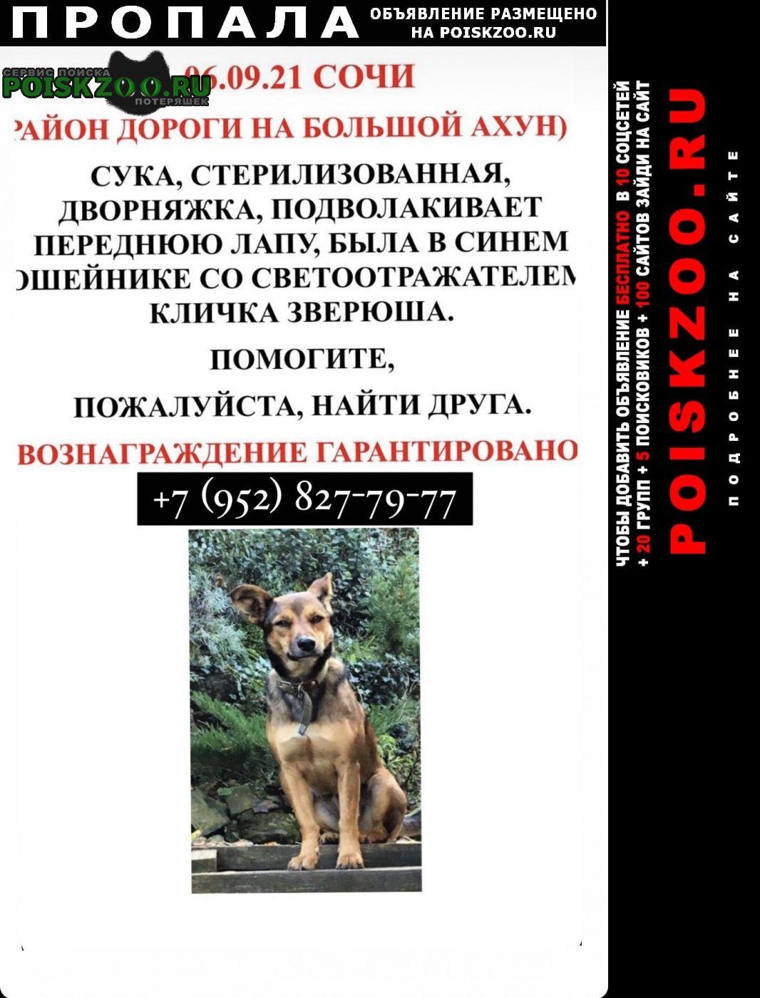Пропала собака помогите найти собаку Сочи