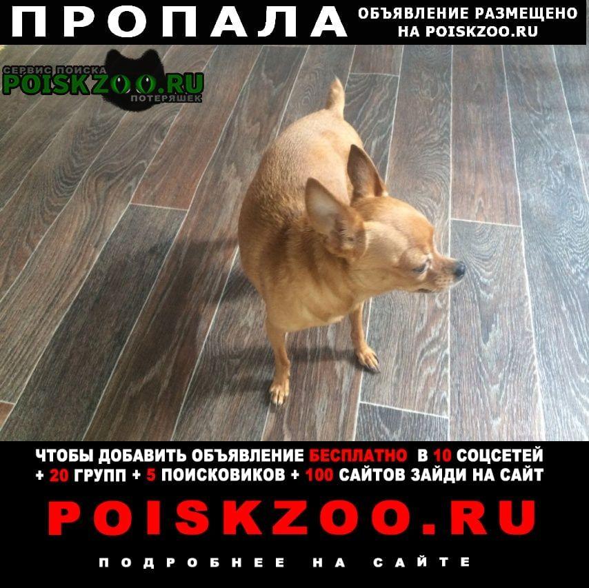 Пропала собака 10.09 девочка тойтерьер. Геленджик