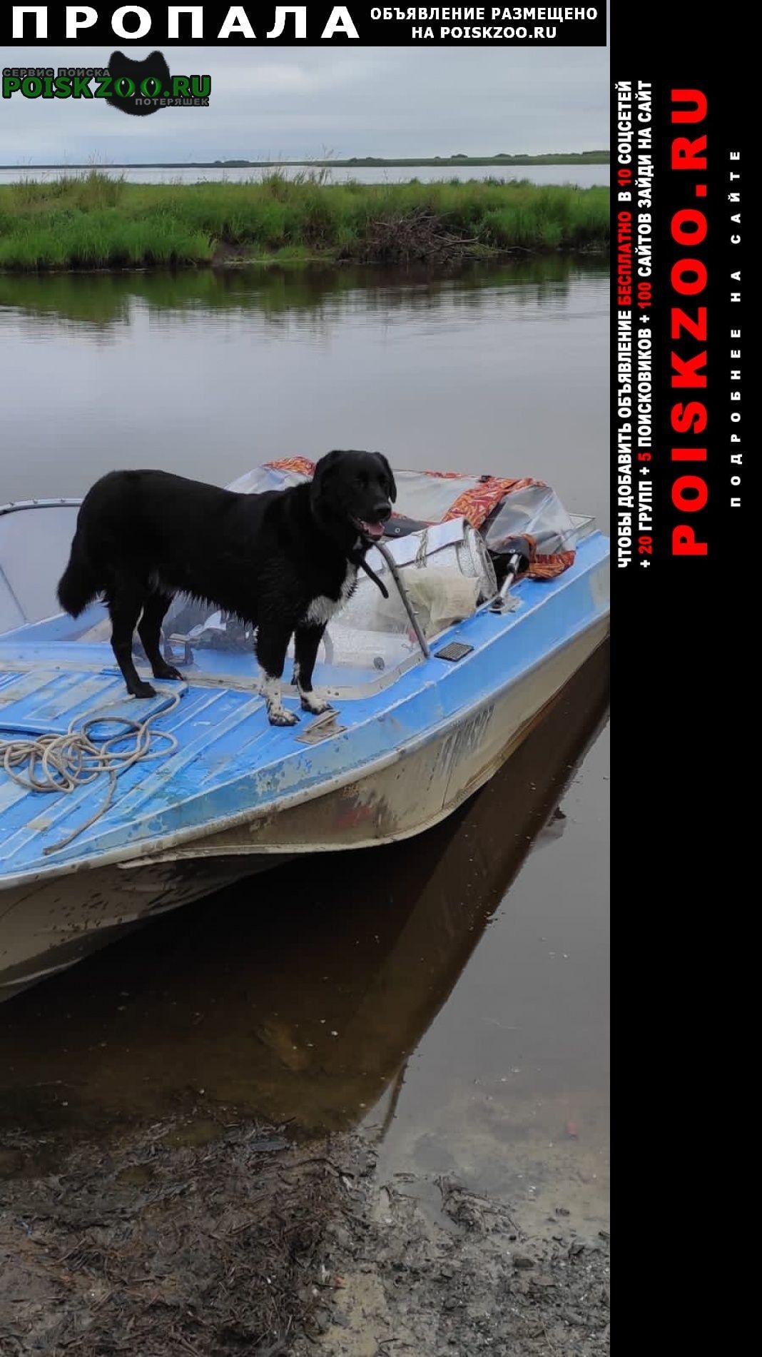 Комсомольск-на-Амуре Пропала собака кобель
