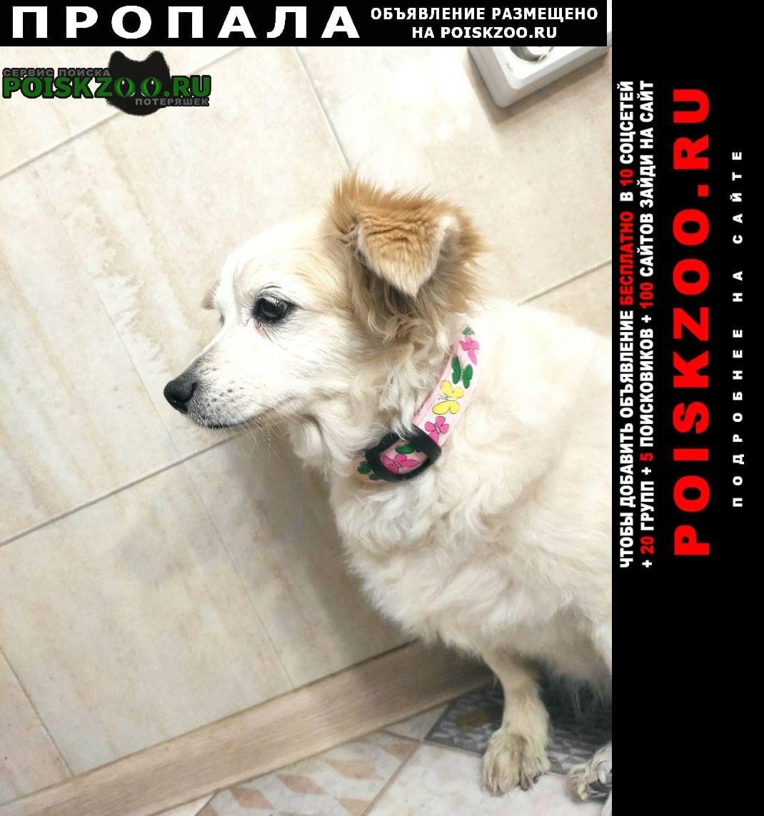 Астрахань Пропала собака