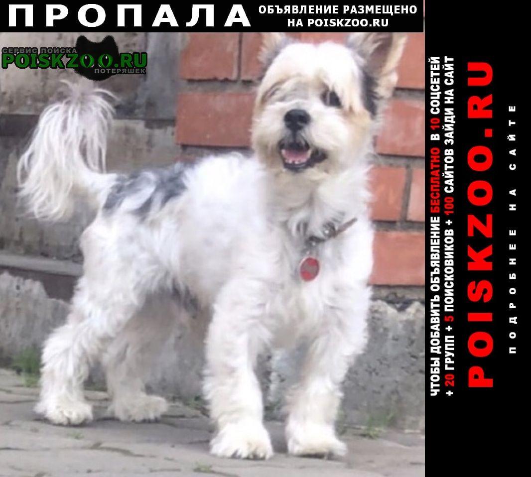 Пропала собака кобель Абакан Хакасия