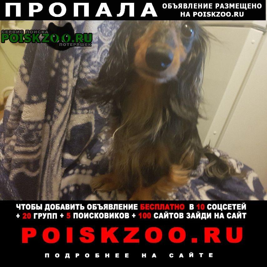 Пропала собака такса длинношестная черно-мраморная Зеленоград