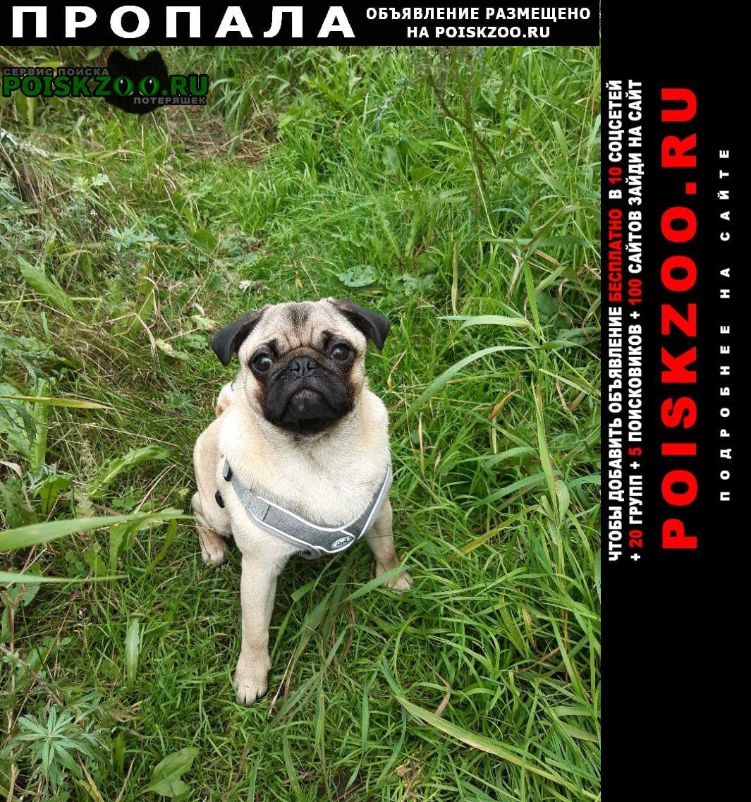 Пропала собака кобель Магадан