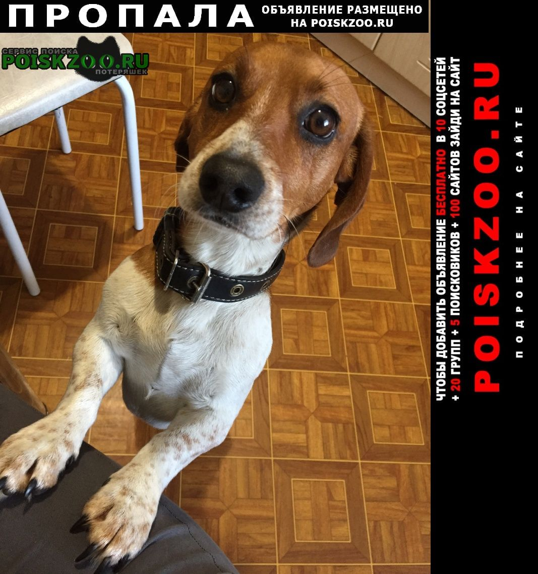Пропала собака кобель Рубцовск