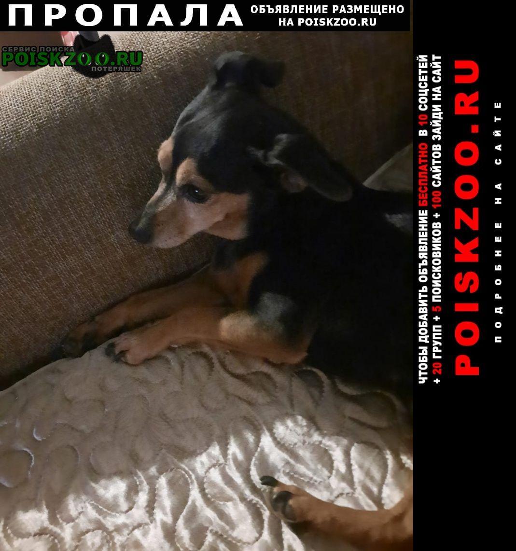 Хабаровск Пропала собака кобель