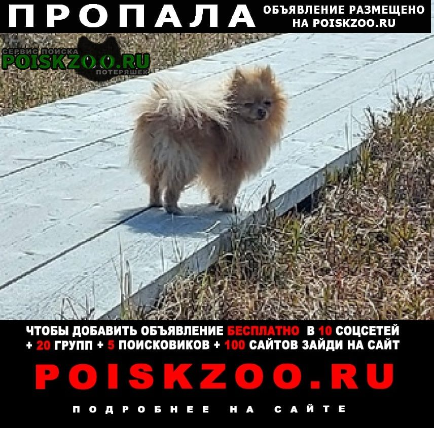 Гдов Пропала собака псковская область