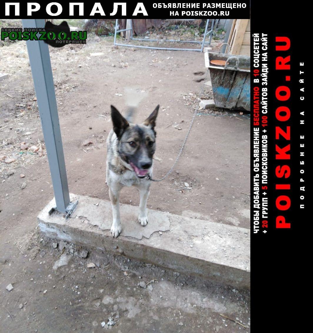 Юрьевец Пропала собака