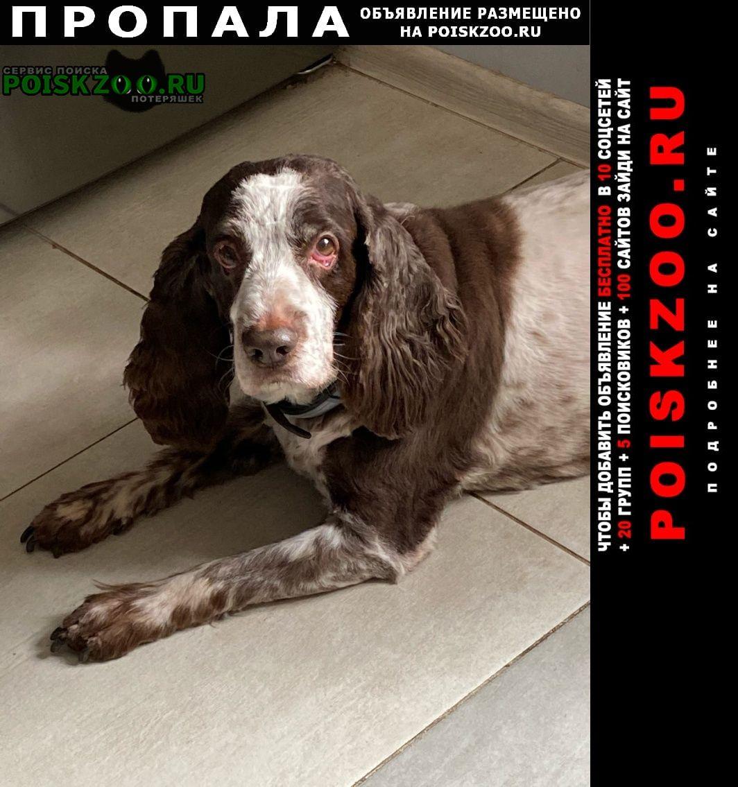 Пропала собака кобель русский спаниель Обухово