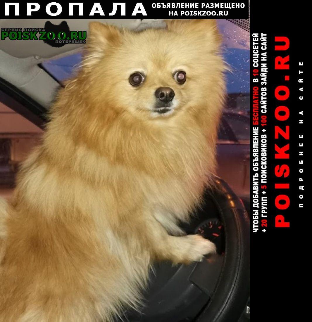 Пропала собака кобель немецкий шпиц Екатеринбург