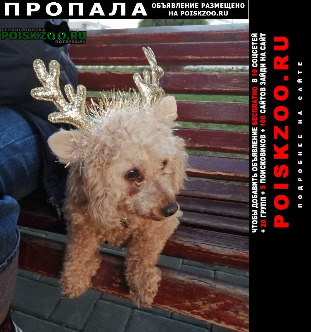 Славянск-на-Кубани Пропала собака член семьи