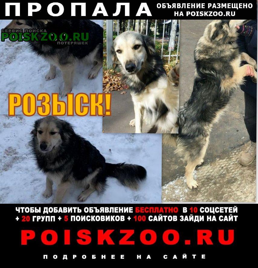 Пропала собака в Домодедово