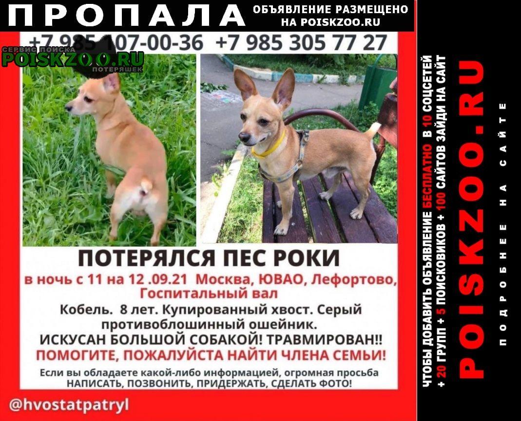 Москва Пропала собака кобель некрупный роки
