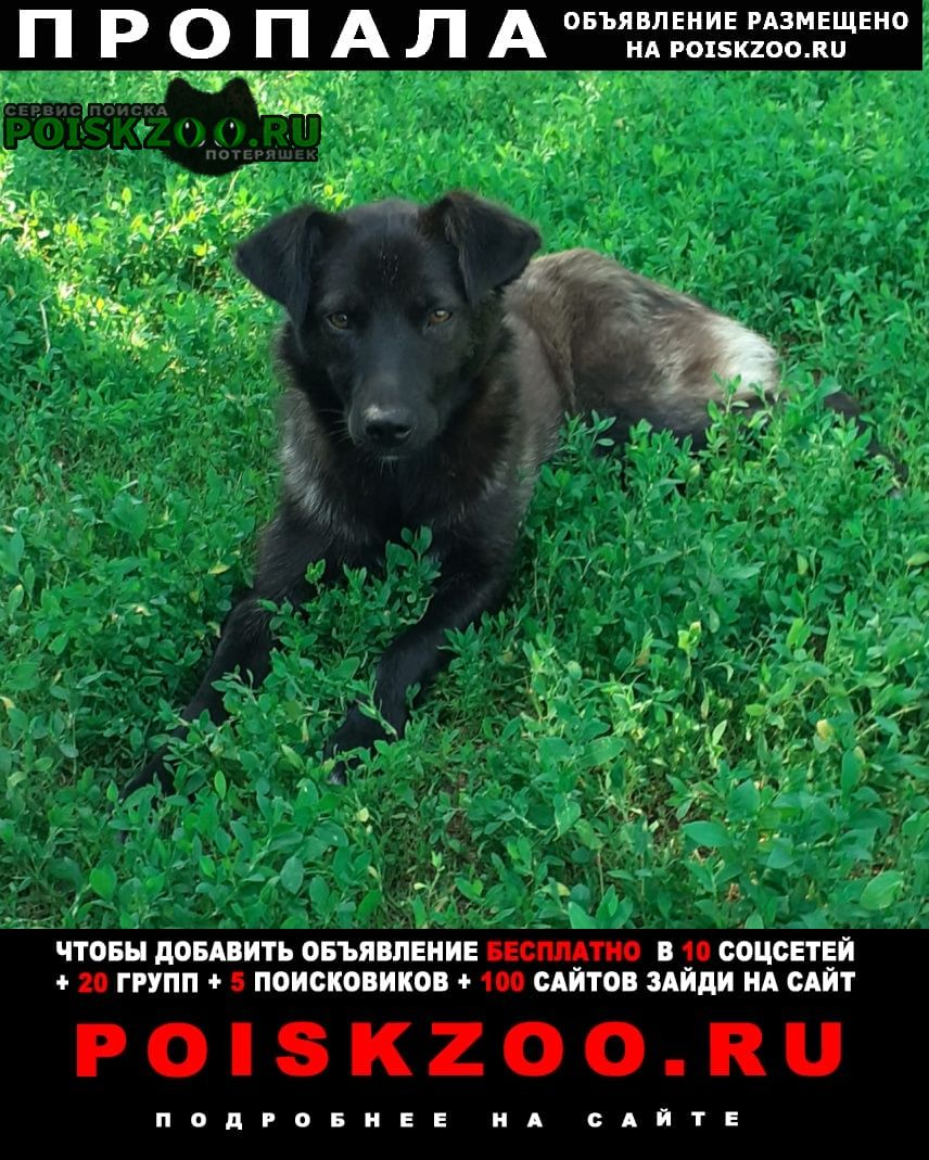 Белгород Пропала собака
