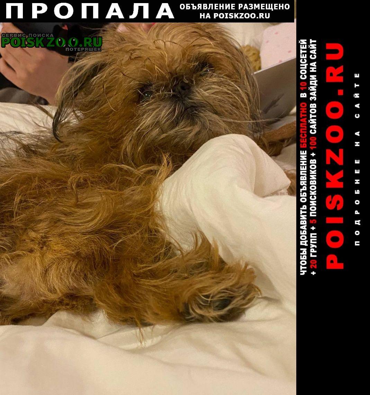 Пропала собака за вознаграждение Иркутск