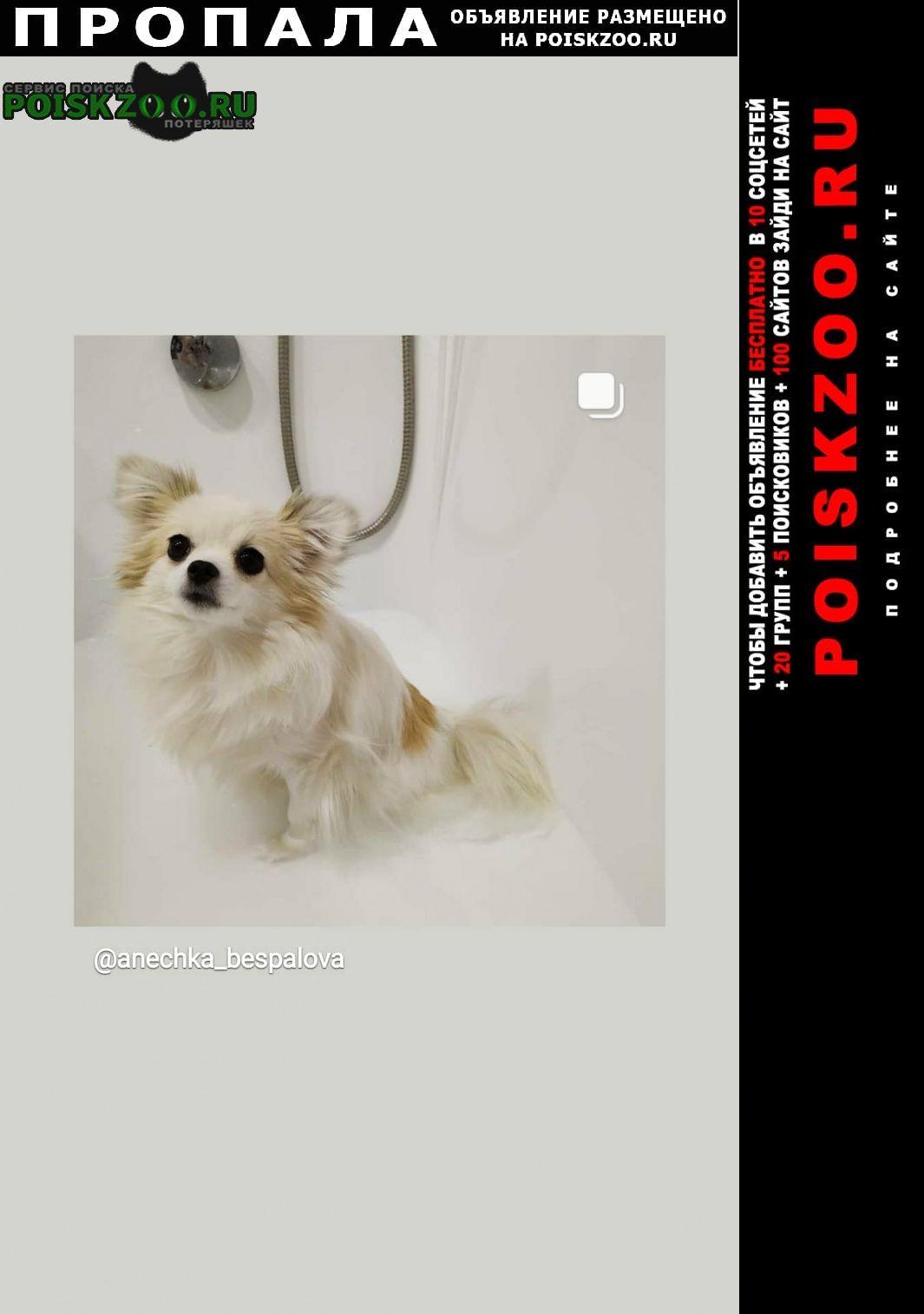 Пропала собака потерялась Томск