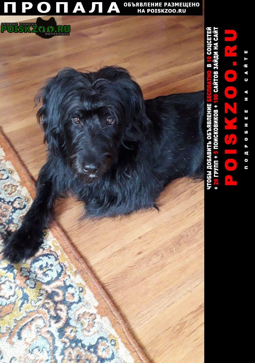 Пропала собака кобель ризеншнауцер Екатеринбург