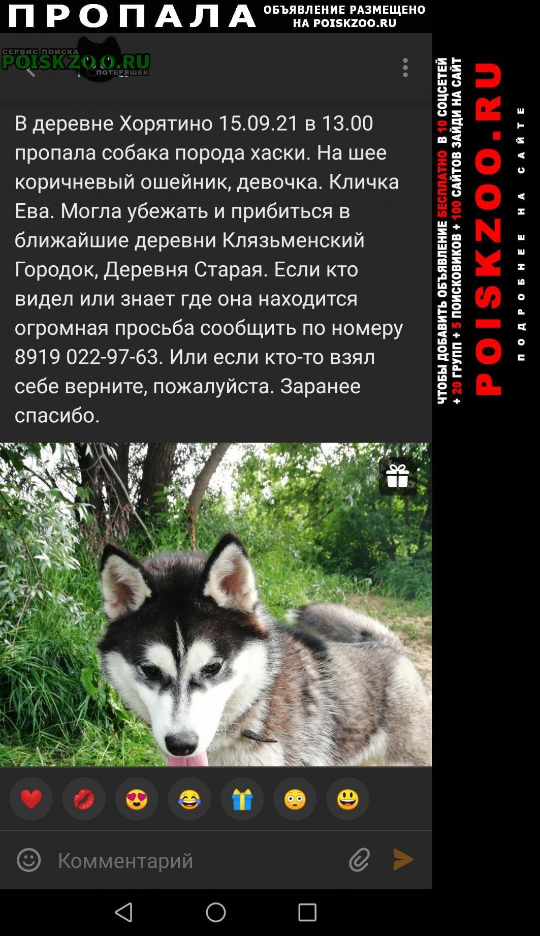 Пропала собака срочно помогите пожалуйста Ковров