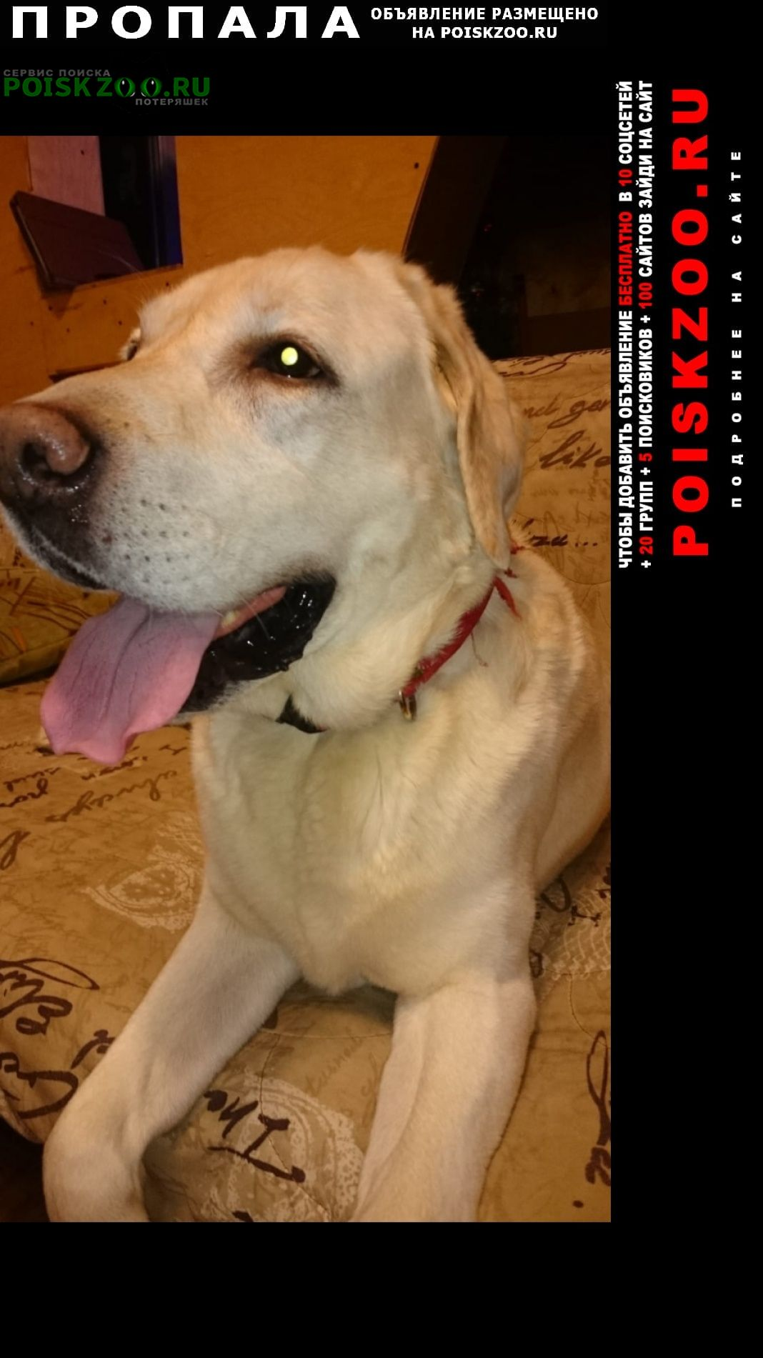 Пропала собака кобель Великий Новгород (Новгород)