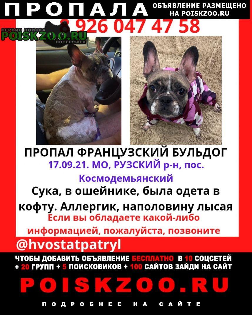 Пропала собака Дорохово
