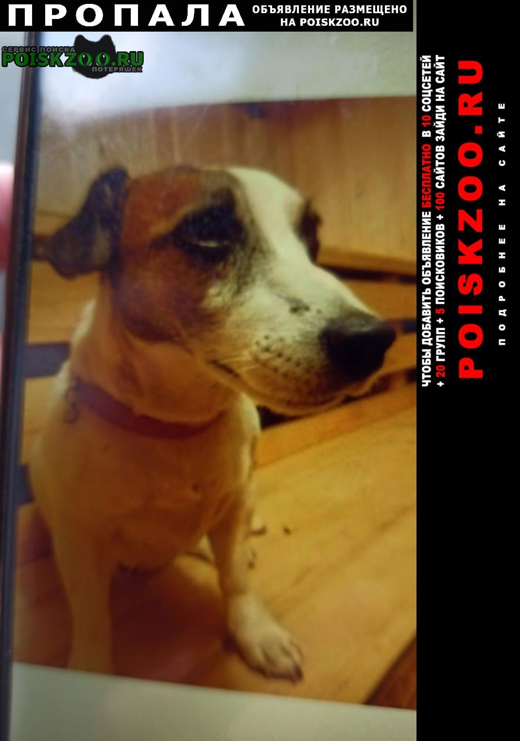 Пропала собака джек рассел терьер Екатеринбург