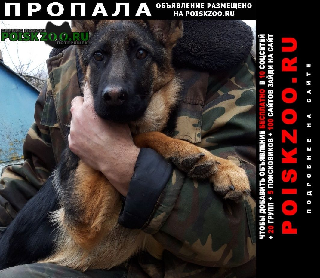 Пропала собака Речица Гомельская обл.