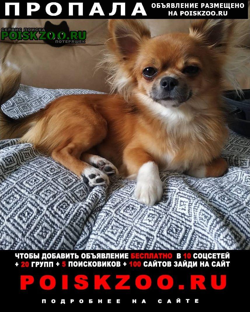 Пропала собака кобель Кстово