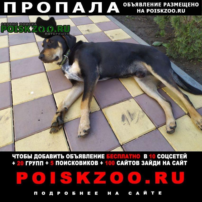 Пропала собака кобель, кличка ральф Динская
