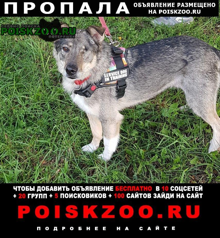 Москва Пропала собака один глаз, серая.