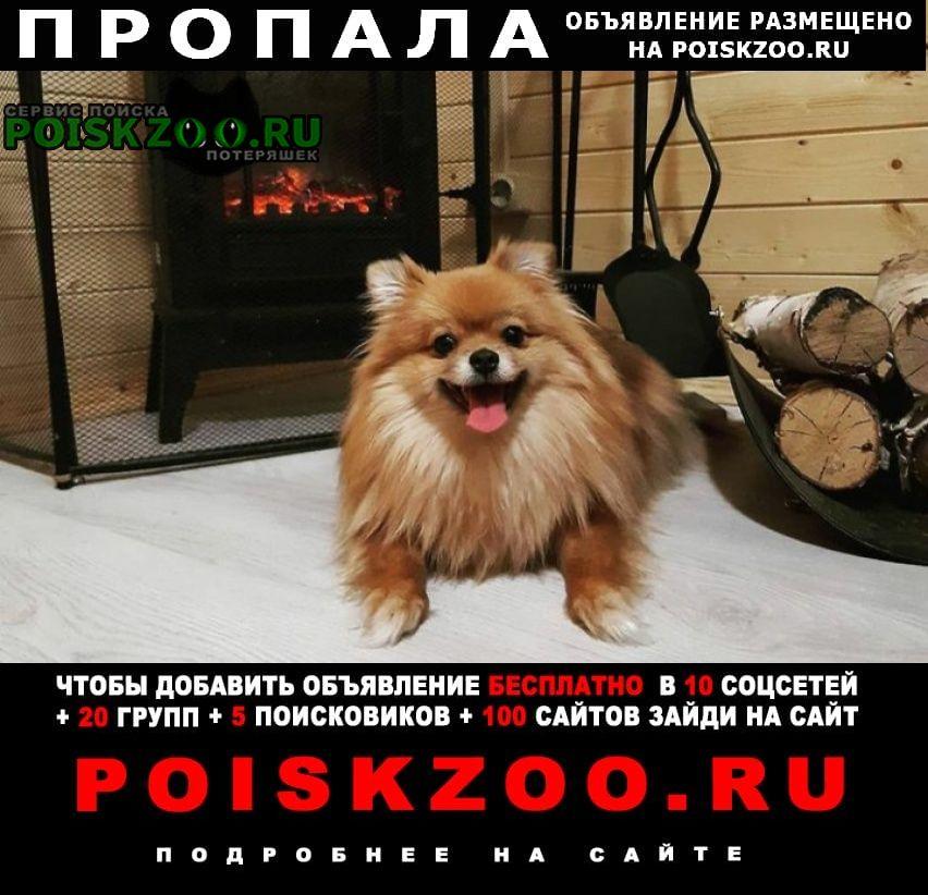 Пропала собака Кадом