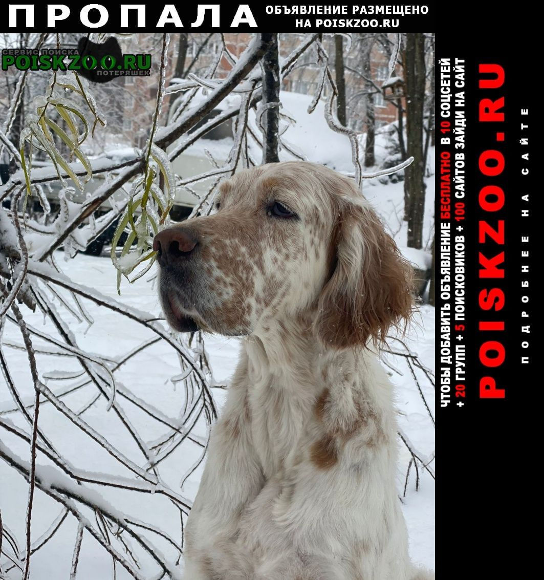 Пропала собака район снеговая падь Владивосток