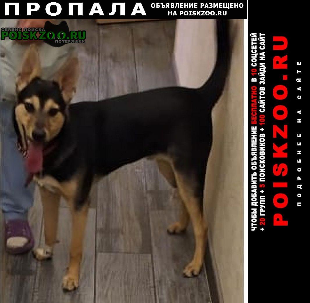 Москва Пропала собака кобель сорвался с поводка кобелек