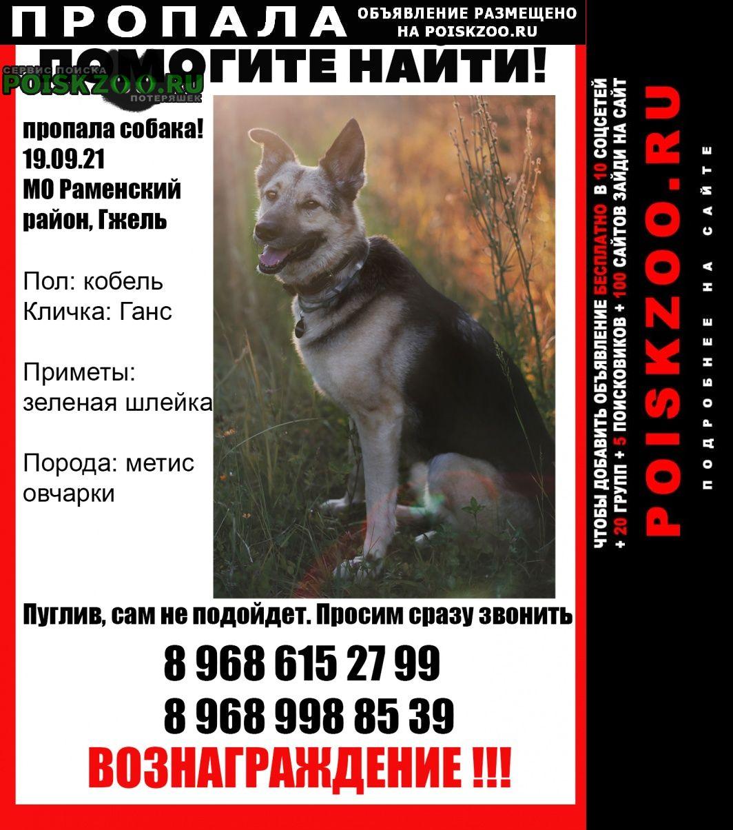Раменское Пропала собака кобель