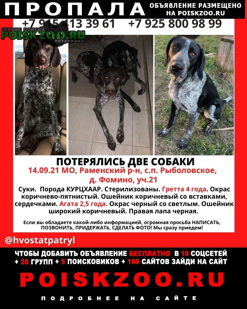 Пропала собака Бронницы