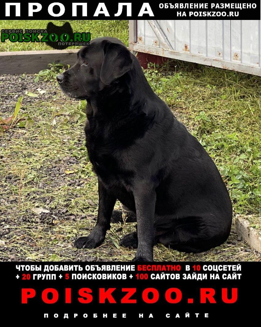Пропала собака кобель черный лабрадор Можайск
