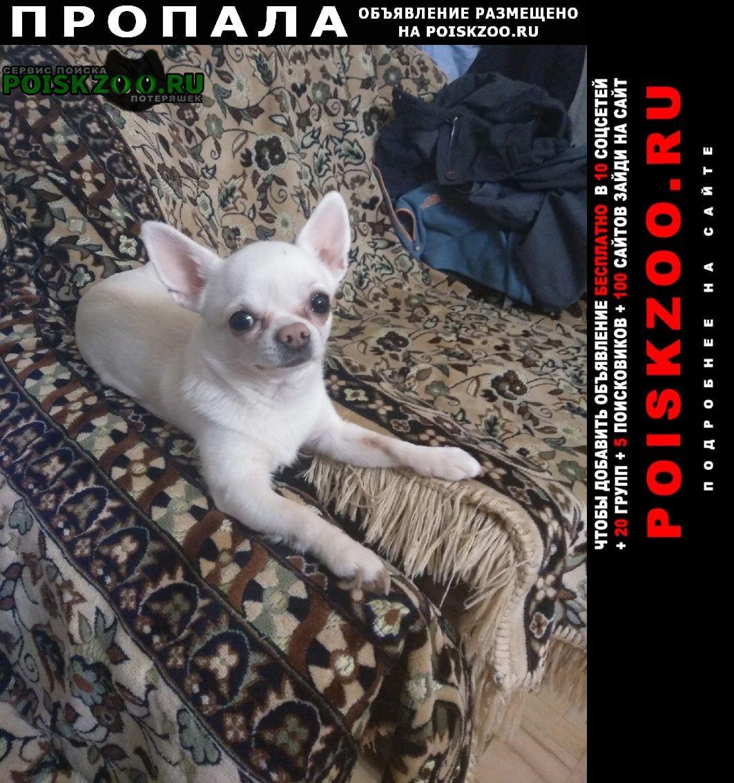 Коммунар Пропала собака кобель