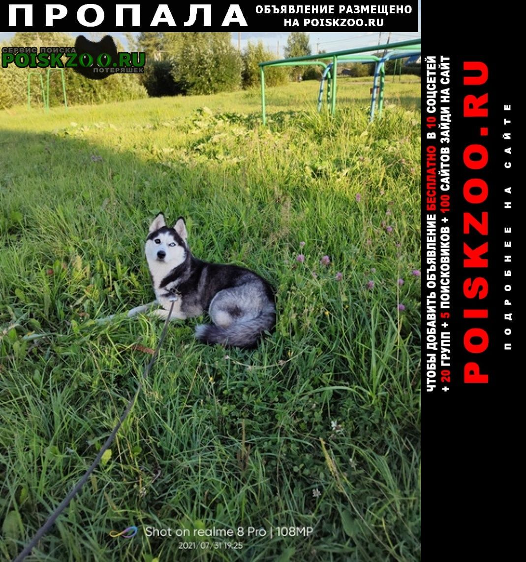 Пропала собака Бокситогорск