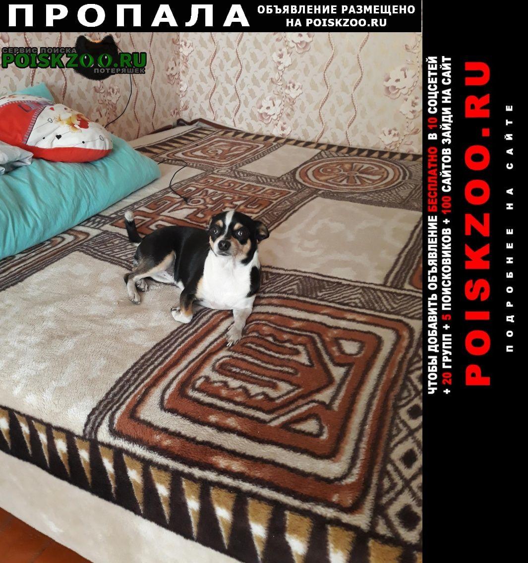 Пропала собака чихуахуа Пенза