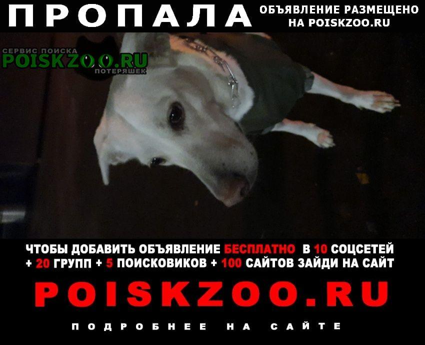 Пропала собака парк кузьминки Москва